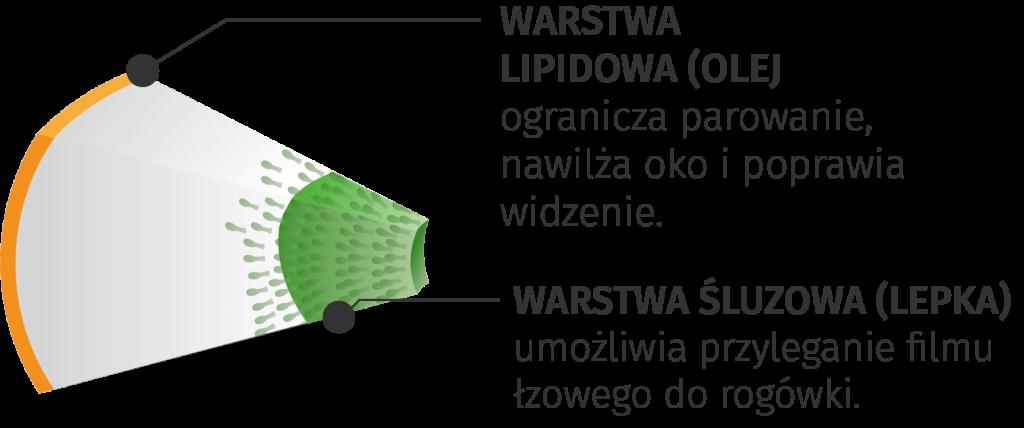 warstwa-nibut